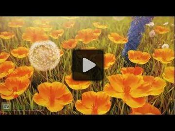 Defiance video 1