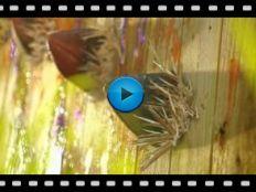 Plants vs Zombies 2 Video-3